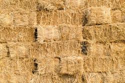 Stack of dry rice straw, rural scene.