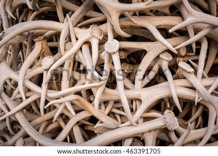 Stack of elk antlers in Jackson, Wyoming, creating an abstract background for hunting or wildlife #463391705