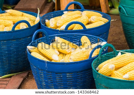 Stack of fresh corn in basket ,  after the corn harvest - stock photo