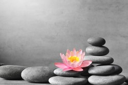Stack of grey massage stones on grey background and lotus flower. Spa concept.