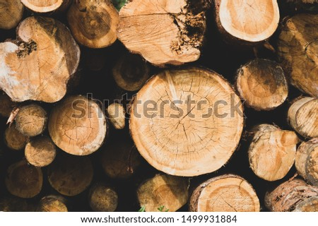 Stack of logs. natural wooden background with timber. log wall. pile of timber #1499931884