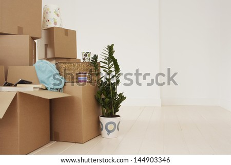 Stack of moving boxes and pot plant in new house