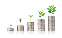 Stack of silver coin with growing plant isolated on white background. Growing savings concept.