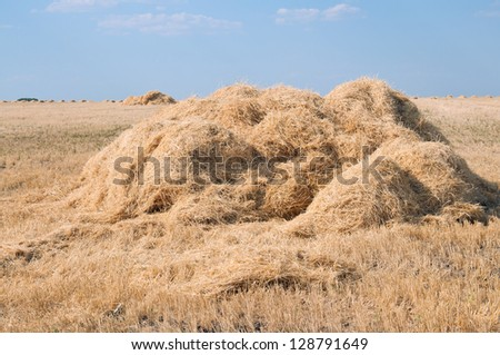 Stack of straw on the field. After harvest.