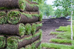 Stack of turf grass for lawn. Carpet of turf, roll of sod, turf grass roll. Installation of landscape and environment
