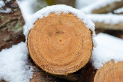 Stack or pile composed of blocks, pieces or logs of wood in winter or spring with snow. Stacking wood for drying and storage, close up