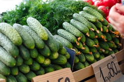 Stack with ripe cucumbers on the counter of the Belarussian market. Fresh vegetables in the street bazaar. Prickly cucumbers.