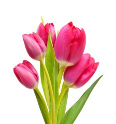Stack Young pink tulips isolated on white background