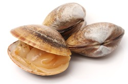 Stacked fresh raw clams on white background