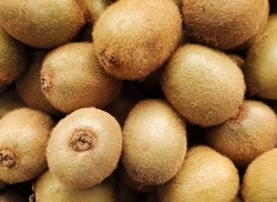 Stacked group of kiwifruits, kiwi or Chinese gooseberry, which is an edible berry from Actinidia genus. Detailed hairy texture of this tropical and exotic delicious organic fruit.