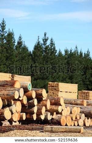 Stacked logs, cut timber and a pine forest, the whole forestry industry