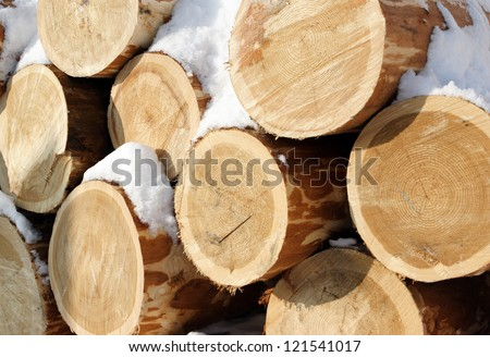 Stacked logs in the snow