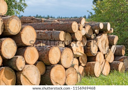 Stacked spruce logs