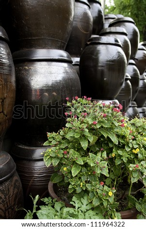 Stacks of Korean Kimchi jars along a wall and a plant in front.