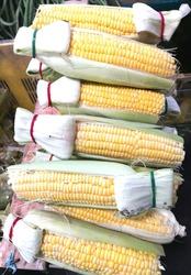 Stacks of sweet corn offered at Bintan Center Traditional Market Tanjungpinang. Taken at Tanjungpinang on 22 August 2020.