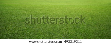 Photo of  stadium grass