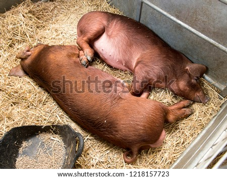 Stafford,Staffordshire/England-circa 2018 Staffordshire Agricultural show   #1218157723