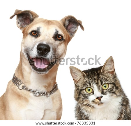 Staffordshire terrier dog and cat. Close-up portrait on a white background