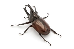Stag beetle isolated on white background.
