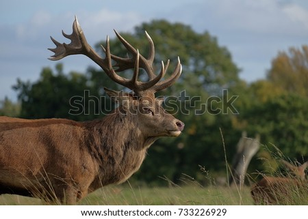 stag in the grass #733226929
