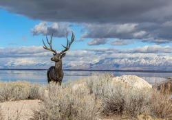 Stag statue on Antelope Island in Utah with view over Salt Lake