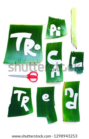 Stage of creation stencil of template. TROPICAL TREND letters from green tropical palm leaves isolated on white. Original idea from natural material for summer design #1298943253