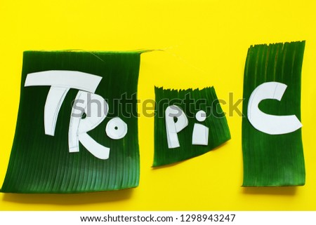Stage of creation stencil. Word TROPICAL letters from green tropical palm leaves on yellow textured background.Original idea from natural material for summer design #1298943247