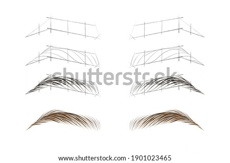 Stages of drawing eyebrows. Drawing hairs on the eyebrows. Hair method of tattooing. Microblading scheme. Training material for the tattoo artist. Eyebrow hair styling scheme. Natural tattoo