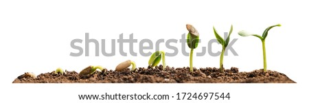 Stages of growing seedling in soil on white background. Banner design Foto stock ©