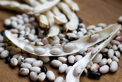 Stages of the white bean crop: dry unopened crop with ready dry beans of the same plant. Concept of different usage for bean crop. Selective focus