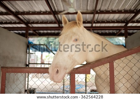 stagnated horse in stable feels unhappy and no freedom