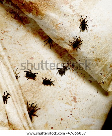 stained bedding with bugs