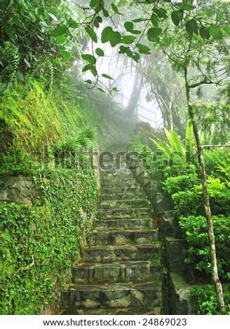 stair to misty tropical park