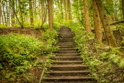 stairs and steps through a forest.