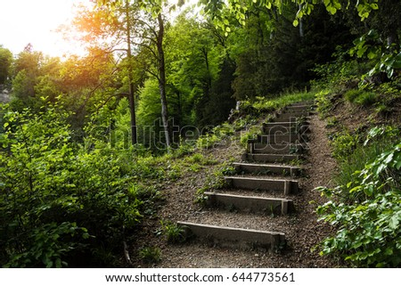 Stairs going up hillside in green forest toward sunset  #644773561