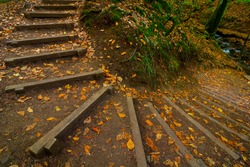 Stairs in the forest made with woods. Ecologycal stairs in the forest. Fallen leaves on the ground.
