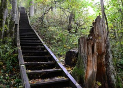 Stairs in the forest. Sigulda, nature