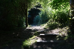 Stairs leading down a path in the woods, on a beautiful summer evening