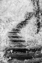 Stairs leading from the lakeside water.