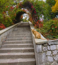 Stairs leading upstairs. An arch of red and green leaves of wild maiden grapes above the stairs. Red cat sits on the parapet of the stairs. Autumn landscape