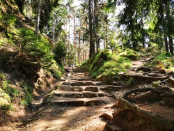 Stairs on the nature trail on the dolomites. Trentino Alto Adige. Naturalistic excursion. Magical landscape. Relaxing atmosphere. Unspoiled nature. Natural reserve. Summer holidays.