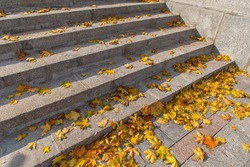 Stairs strewn with autumn leaves