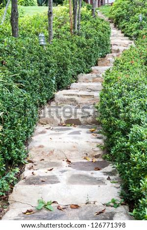 Stairway in garden