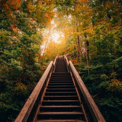 STAIRWAY LEADING TO MAGICAL FOREST SCENE - Beautiful shot of sunlight pouring through forest trees onto stairs in gorgeous dream-like fall/autumn scene. Glowing warmth. Toronto, Ontario, Canada