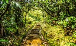 Stairway Pathway on the island of Dominica on Boiling Lake Hike/Stairway Pathway Dominica
