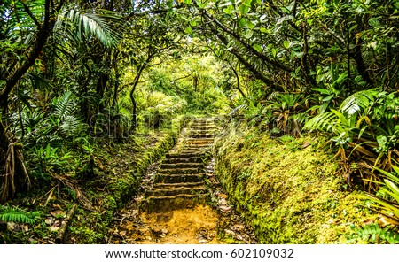 Stairway Pathway on the island of Dominica on Boiling Lake Hike/Stairway Pathway Dominica Stockfoto ©