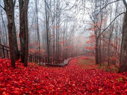 Stairway road in red autumn forest