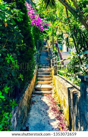 Stairway surrounded with trees greenery bushes and foliage - Summer scene of intimate stairways #1353072659