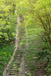 Stairway to heaven: long steep stairway in a spring forest