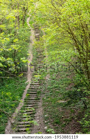 Stairway to heaven: long steep stairway in a spring forest Stock photo ©